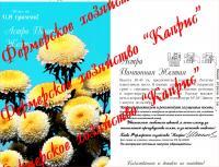Астра Купидончик/Желтая помпонная (20пак*0,5 гр.)
