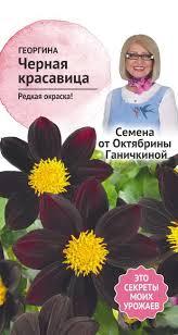 Георгина Черная красавица 5 шт. (семена от Ганичкиной)