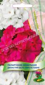 Пеларгония зональная Династия Бело-фиолетовая 5 шт.
