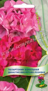 Пеларгония Династия Фиолетово-розовая 5 шт.