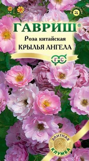 Роза Крылья Ангела 5 шт.
