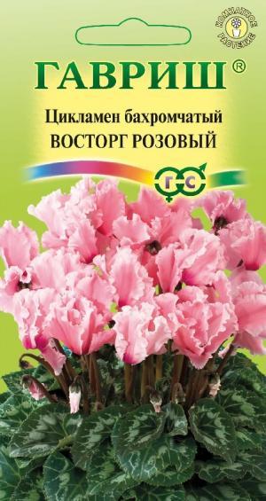 Цикламен Восторг розовый 3 шт.