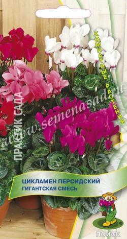 цикламен Персидский Гигантская смесь 2 шт.