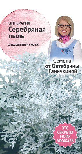 цинерария Серебряная пыль 0,1 г (семена от Ганичкиной)