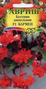 Бегония Кармен амп. 5 шт.