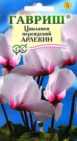 Цикламен Арлекин 3 шт