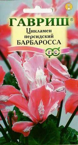Цикламен Барбаросса 3 шт.