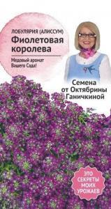 Алиссум Фиолетовая королева 0,1 г (Семена от Ганичкиной)