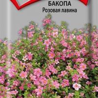 Бакопа Розовая лавина 5шт