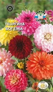 Георгина Богема